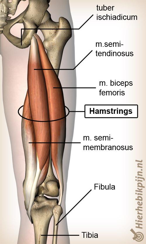 hamstring blessure